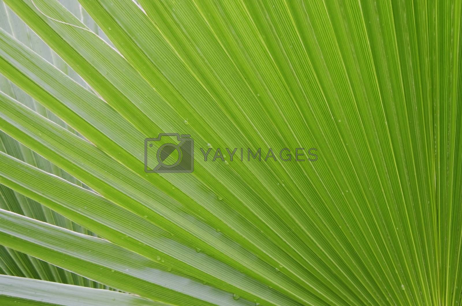 Photo of the Palm Green Leaf Background