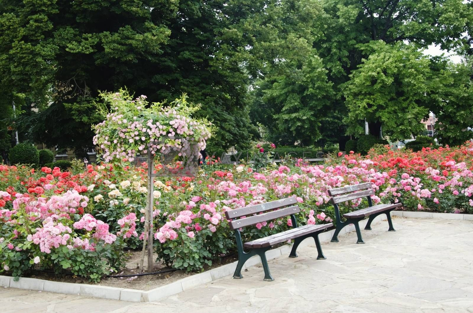 Photo of Multicolored Rose Park or Garden