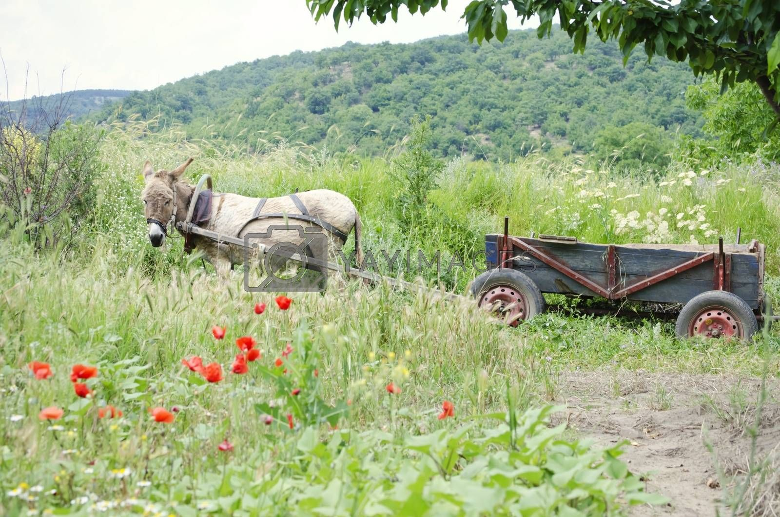 Donkey with Wooden Dray Over Natural Landscape