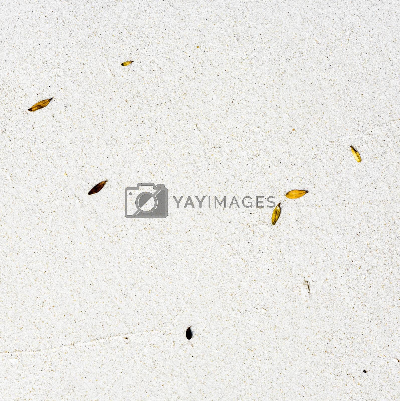 Royalty free image of beach with arrangement of leaves by meinzahn