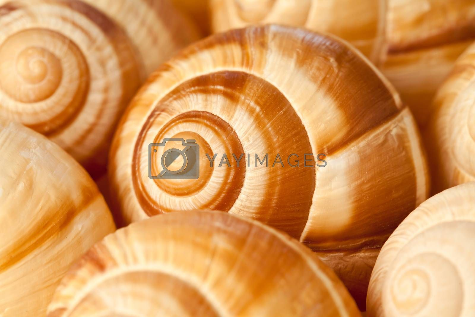 Close up photograph of some snail shells