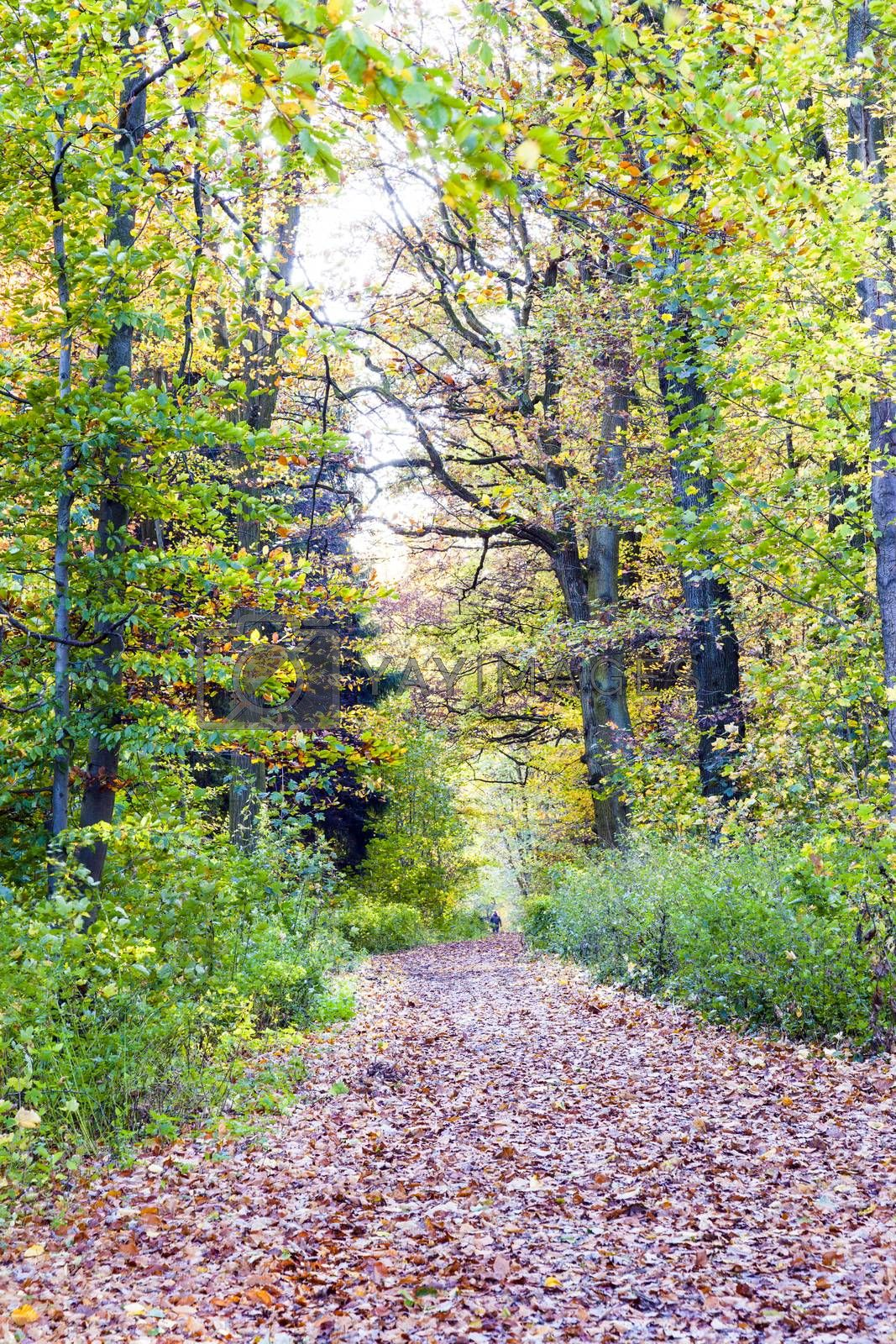 View of a dirt way in the mixed oak forest