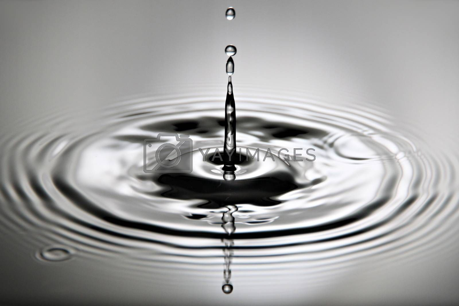 Closeup Pictures is water drops a beautiful shape.