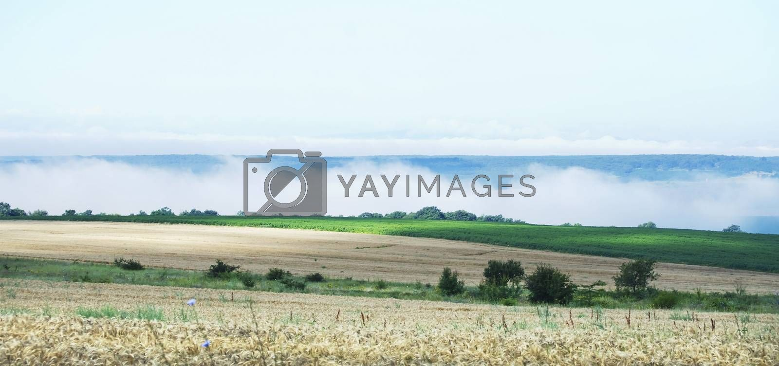 Natural Agricultural Rural Landscape Over Cloudy Sky