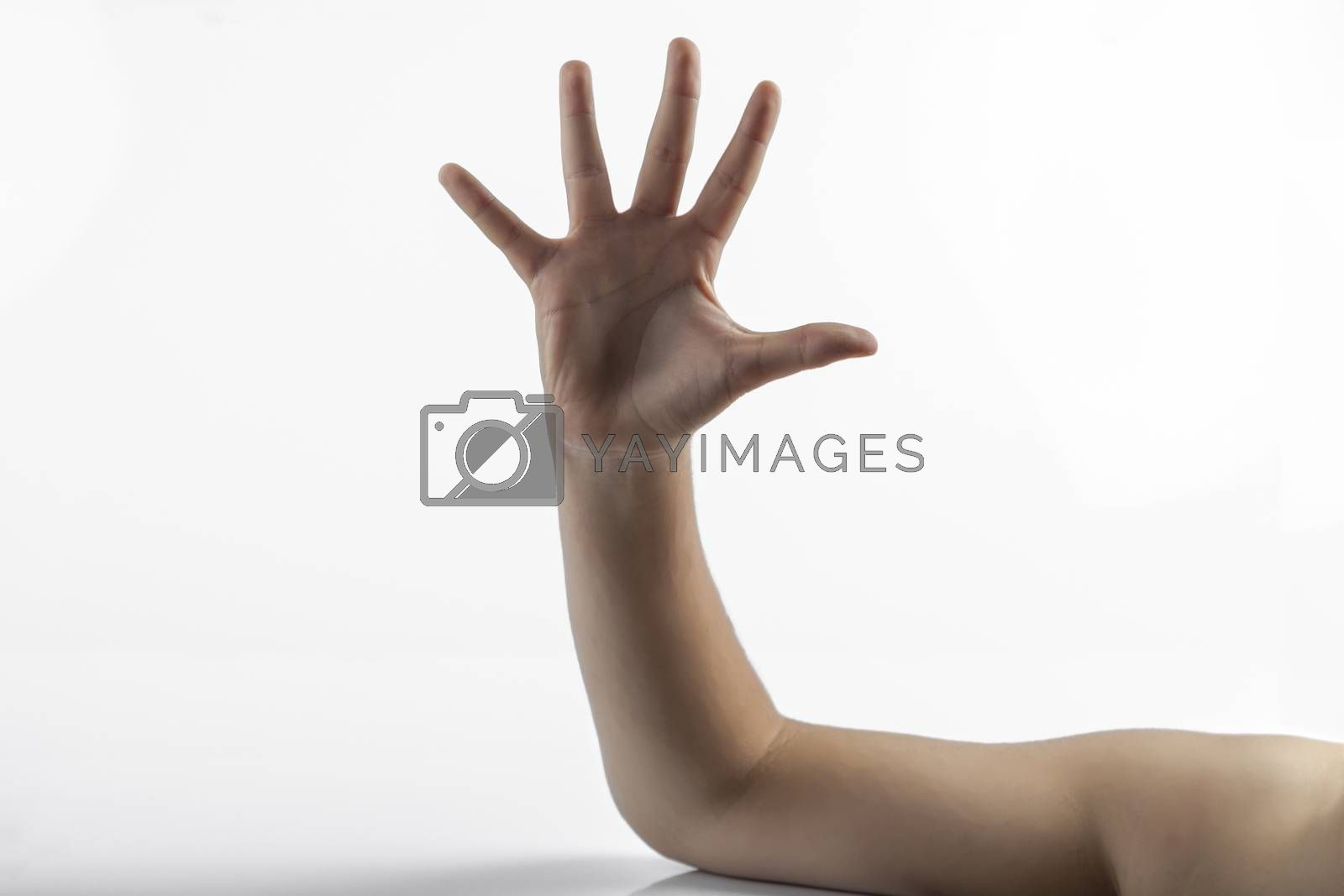 Young hands make a five fingers gesture