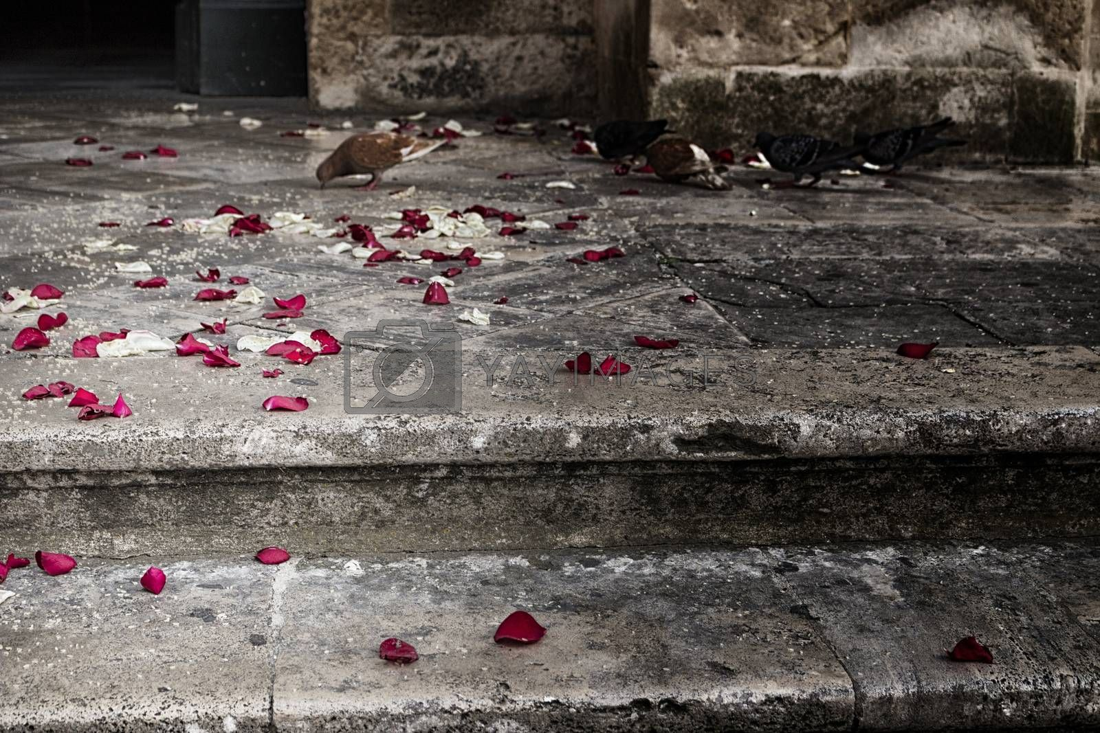 Just married: rose petals and rice grains on the steps of a staircase