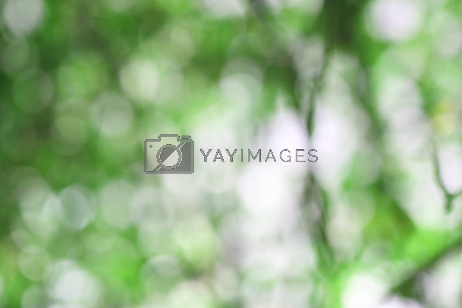 green background of bokeh for the backdrop.