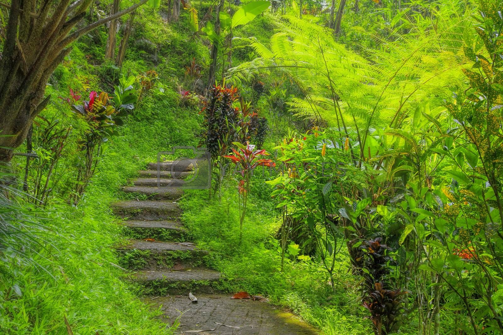 Green tropical jungle pathway on Bali, Indonesia