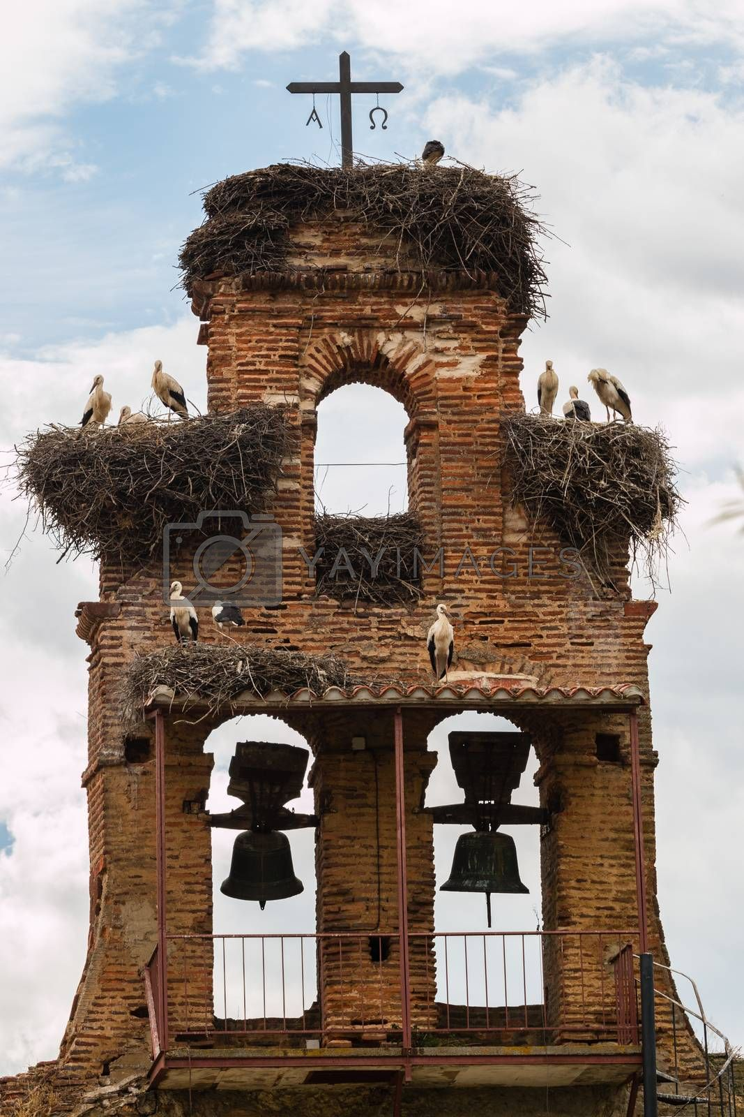 Curious image of  a old belfry crowded with stork nestes in a small village in the provonce of leon , Spain