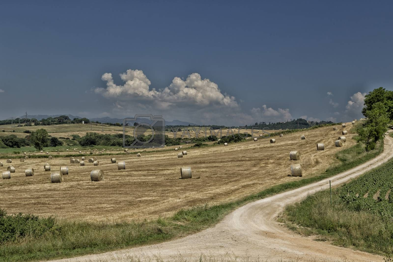 Field of hay bales in central Italy