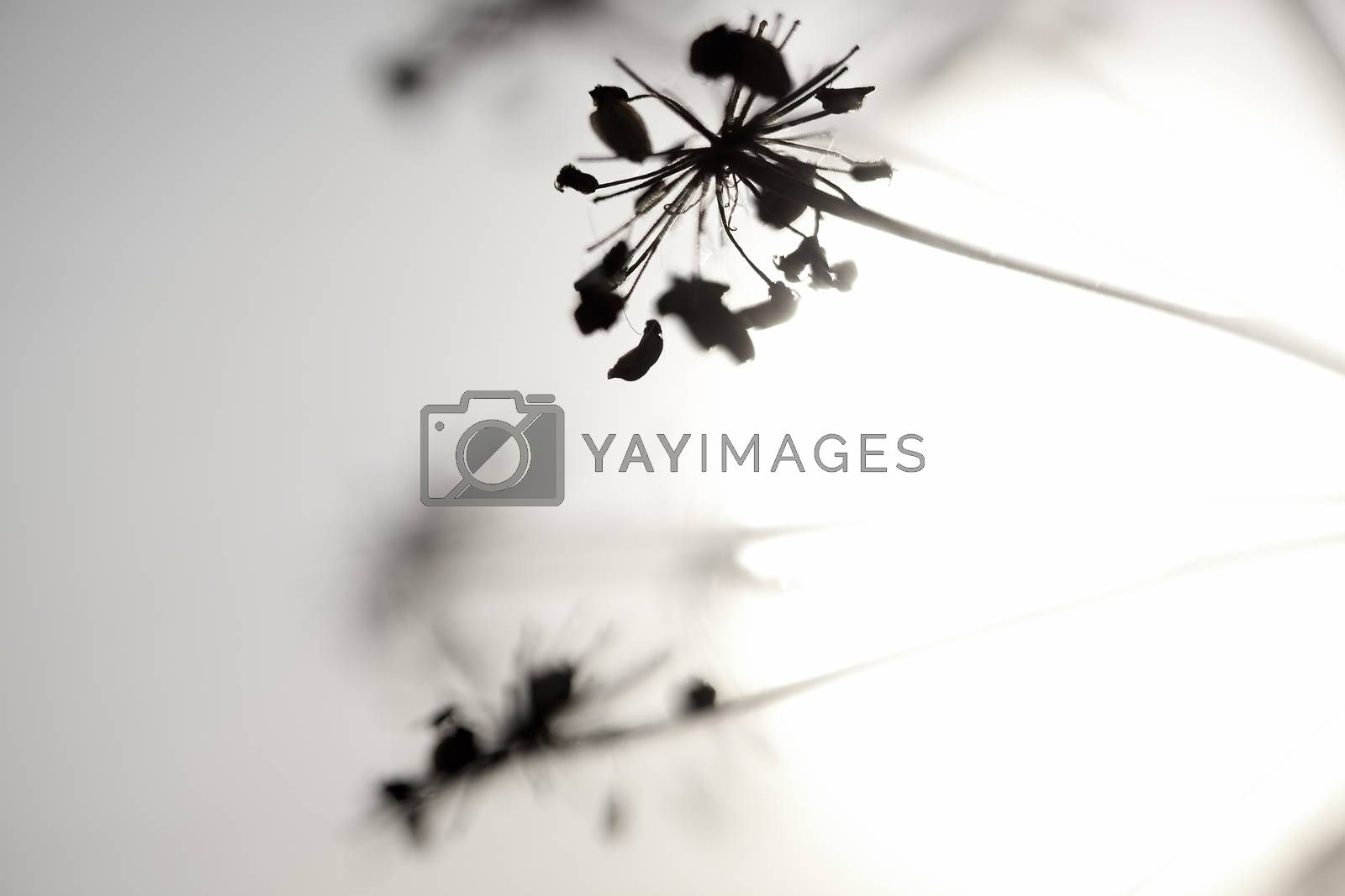 Artistic silhouette of flowers against the sun - shallow DOF