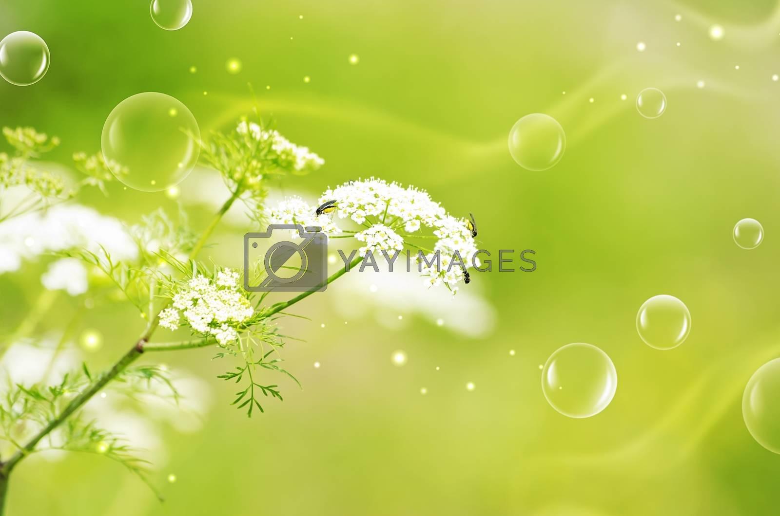 Royalty free image of Green Natural Mood by razvodovska