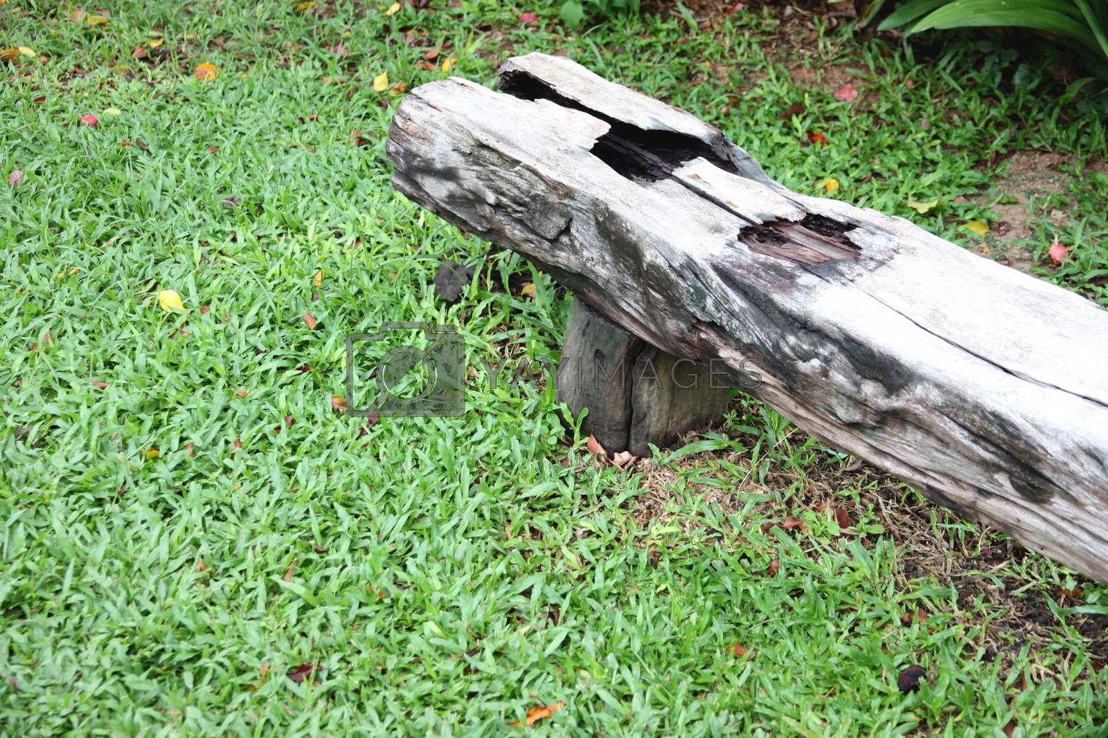 Old wooden bench on green grass in the garden.