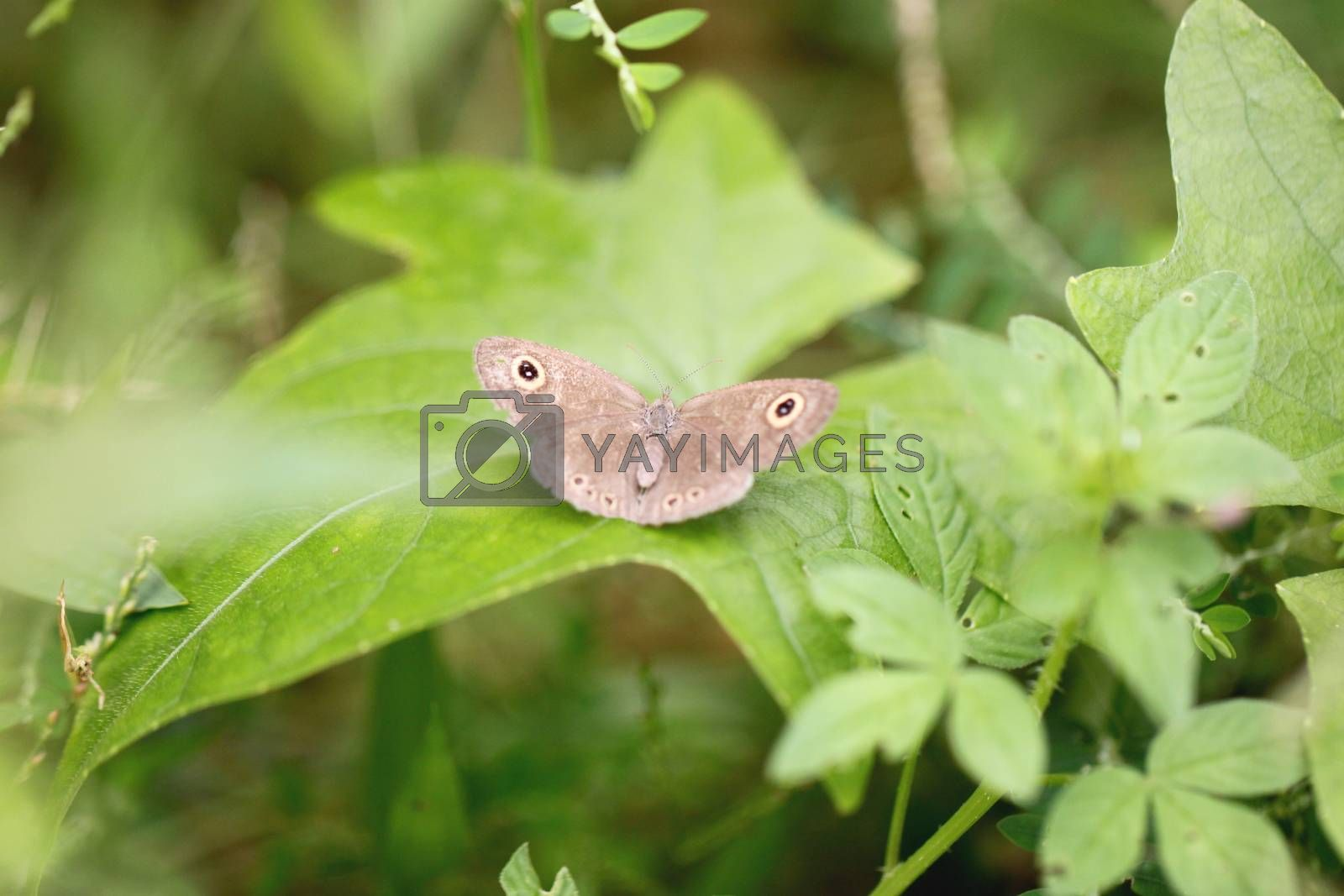 Brown butterfly on green leaves in the garden.