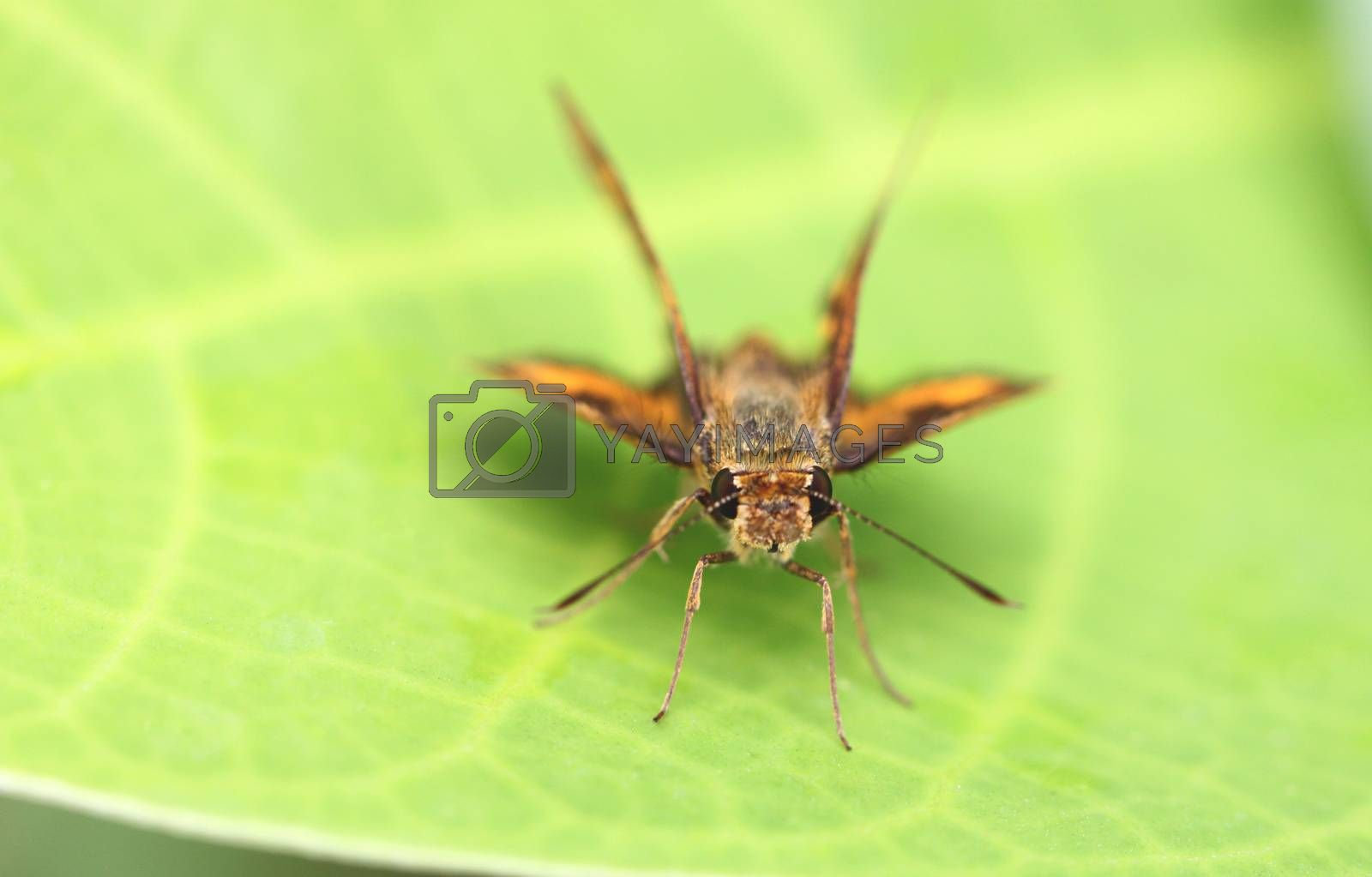 Brown insect on green leaf. by PiyaPhoto