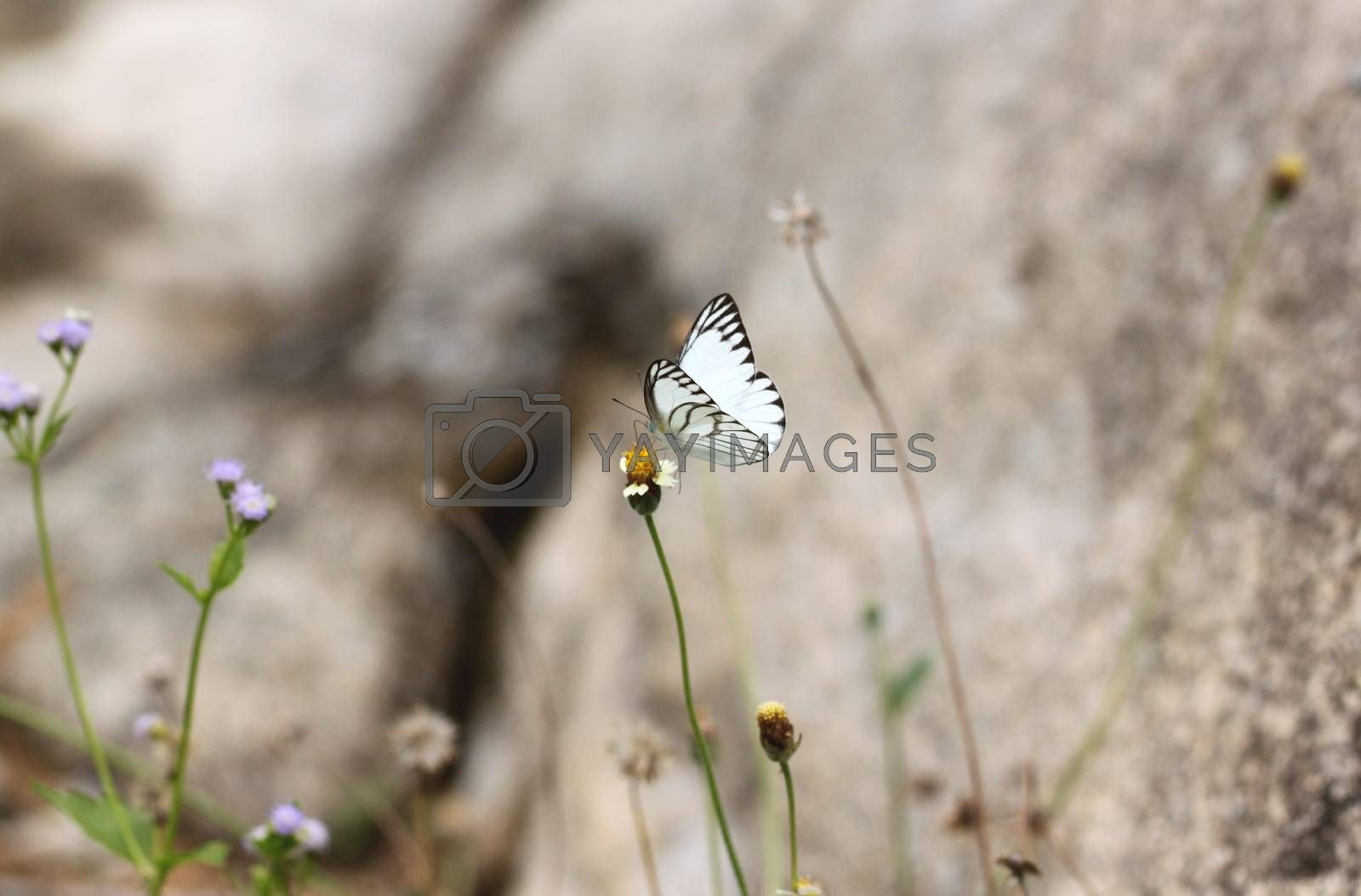white butterfly on the flower. by PiyaPhoto