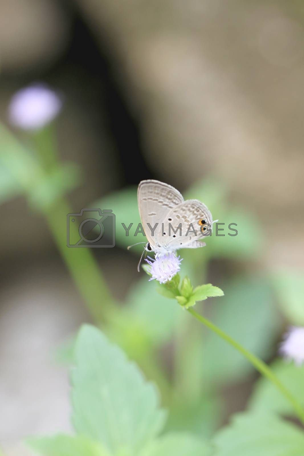 brown butterfly on the flower. by PiyaPhoto
