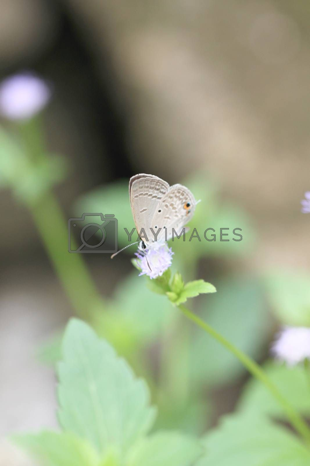 brown butterfly on the flower in garden.