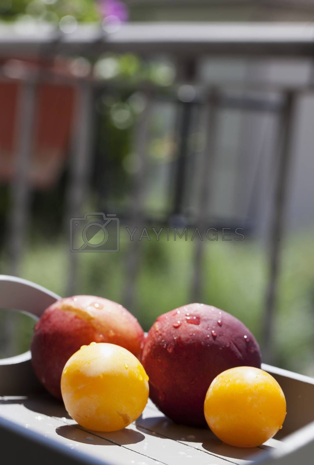 Royalty free image of Fruits by Koufax73