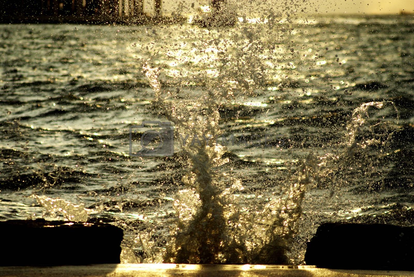 Royalty free image of Splashing wave by pixbox77