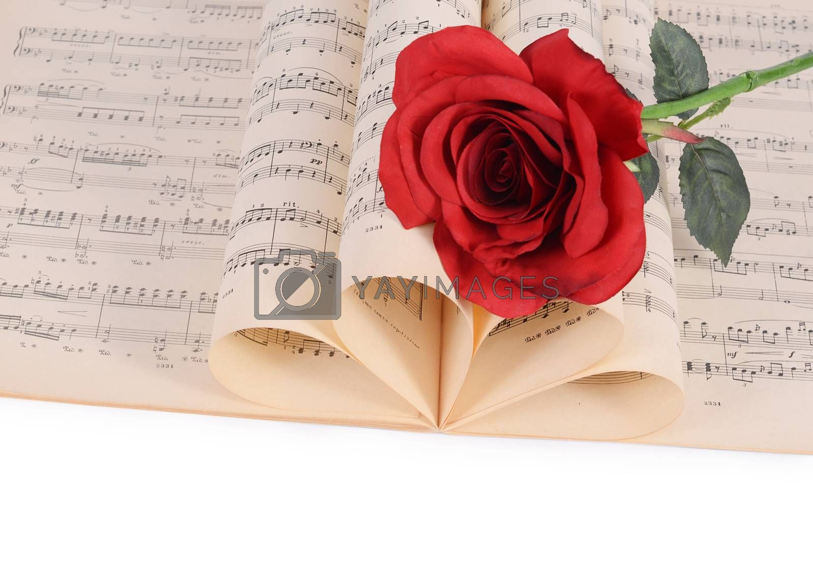 Royalty free image of The rose on notebooks with notes by SvetaVo