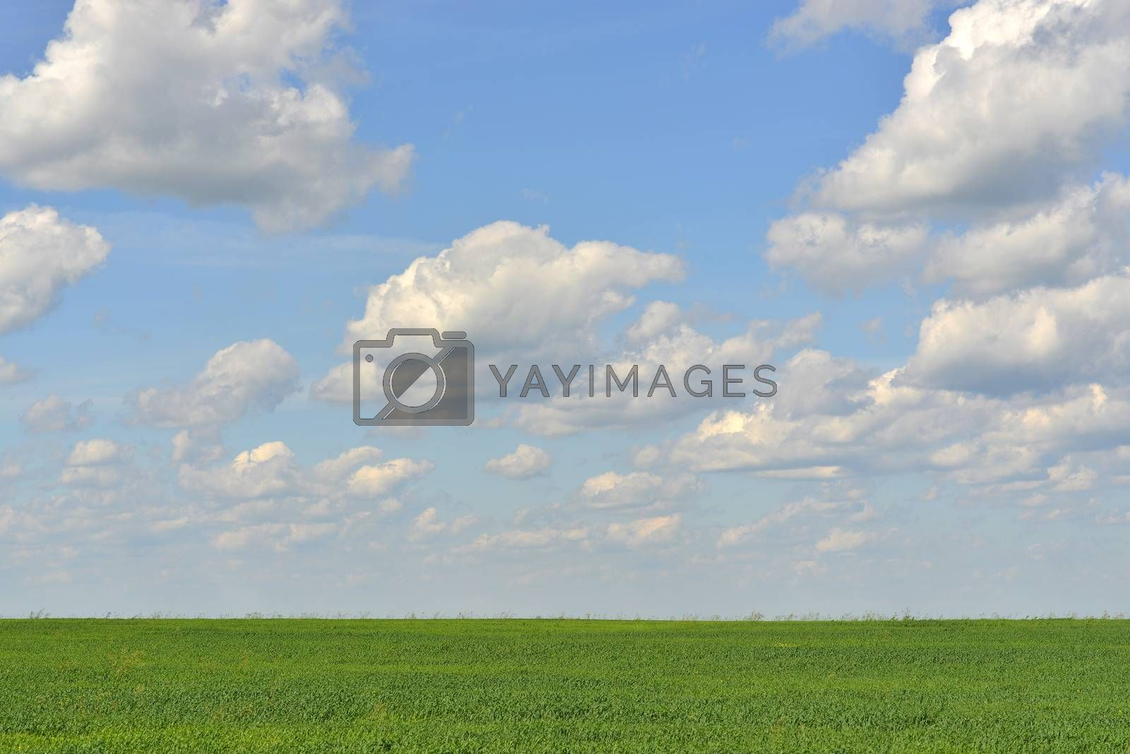 Royalty free image of Green field and blue sky by cherezoff