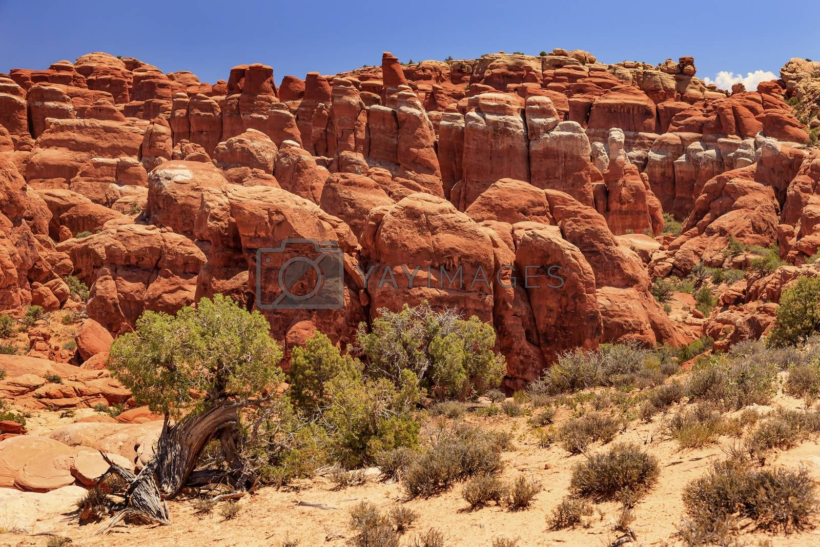 Royalty free image of Fiery Furnace Hoodoos Rock Canyon Arches National Park Moab Utah by bill_perry