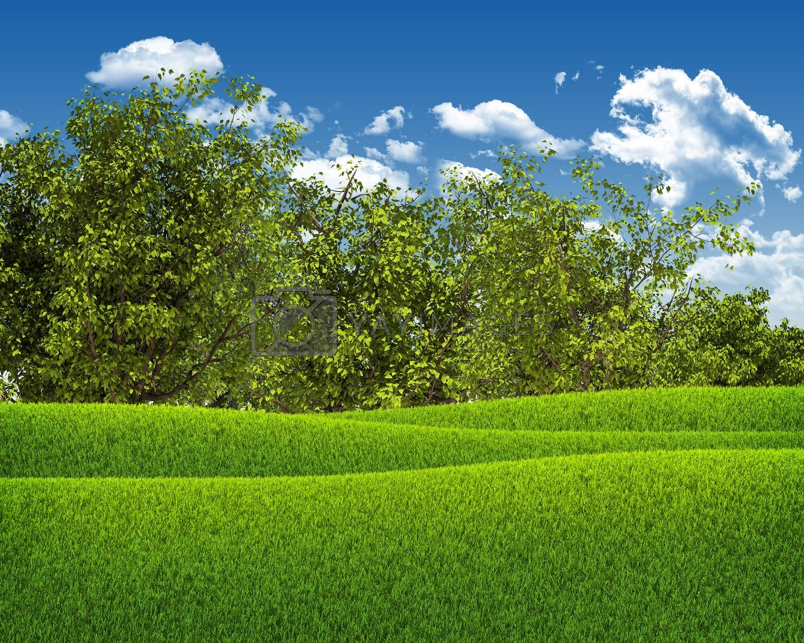 Royalty free image of Green field, forest and blue sky by cherezoff
