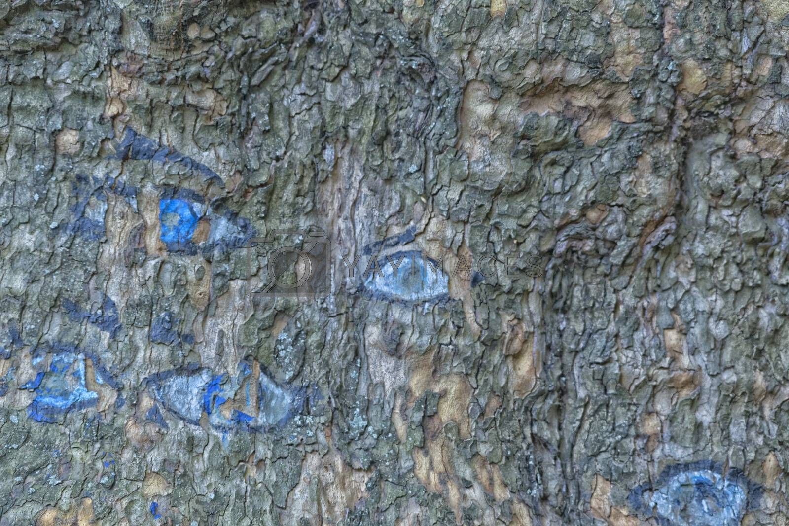 Blue eyes drawn on the bark of a tree