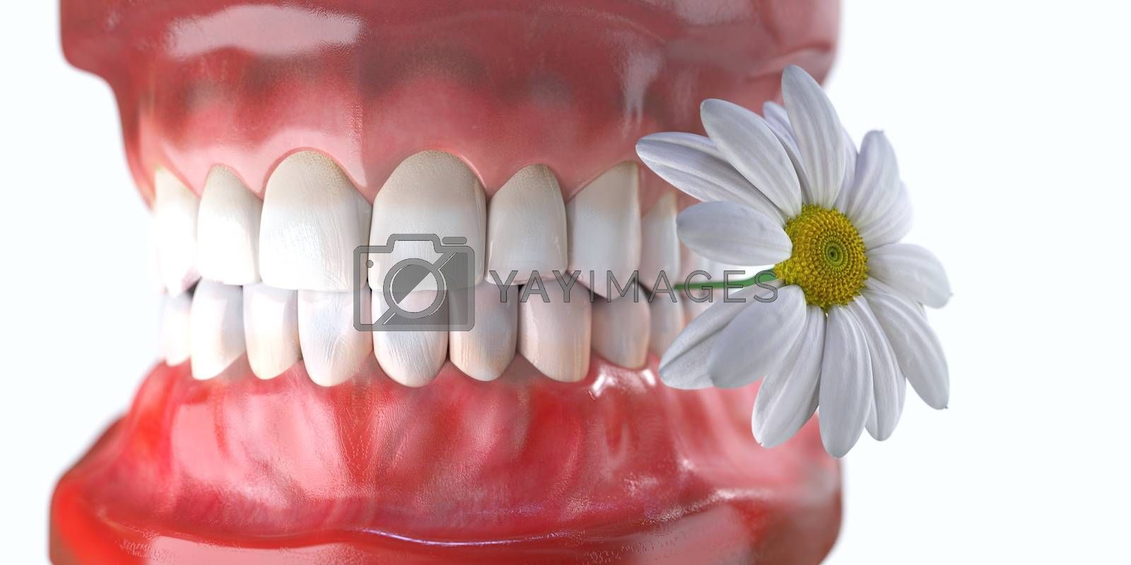 teeth with flower medicine dental health concept by denisgo