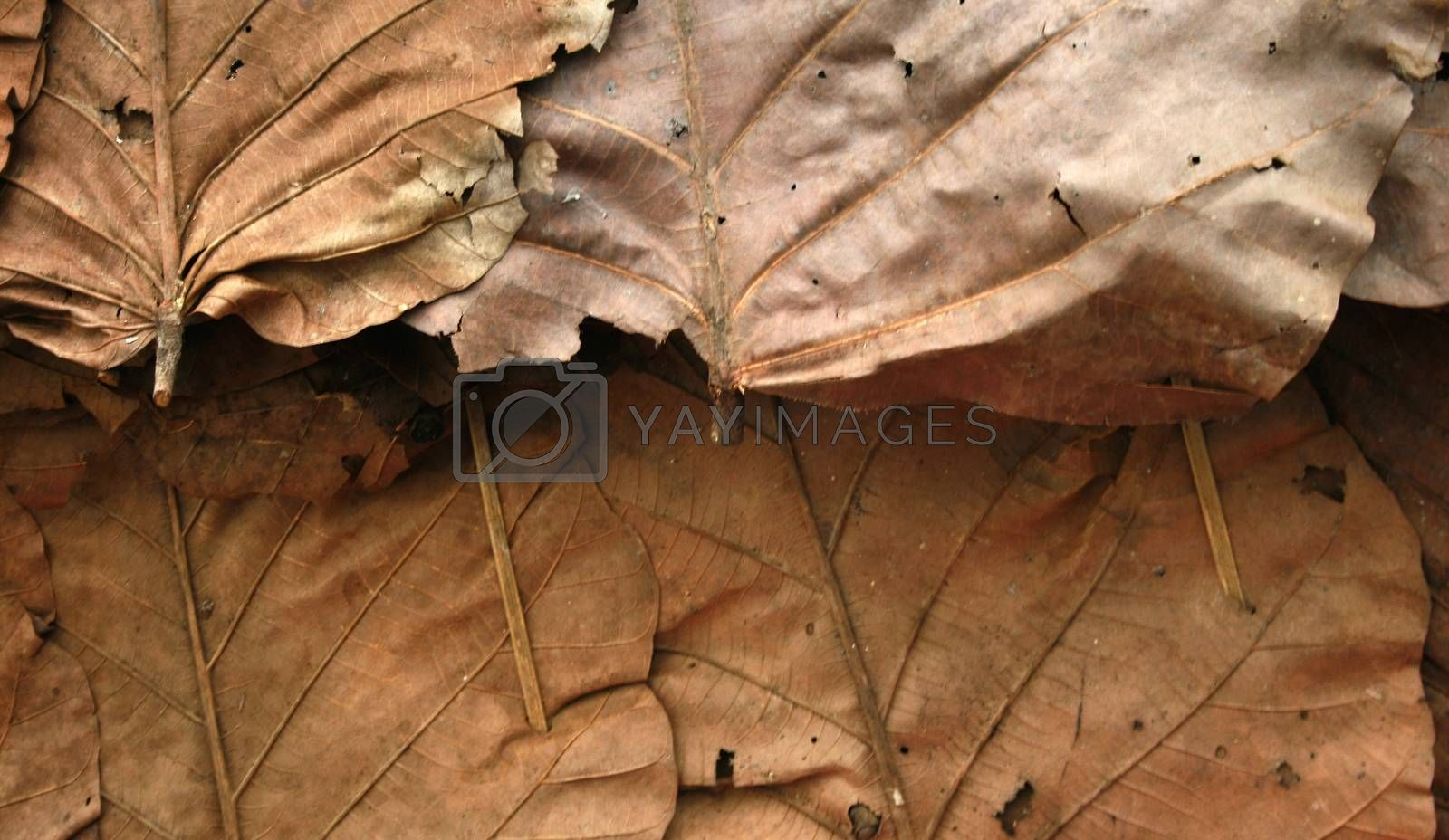 Roofs made from dry leaves