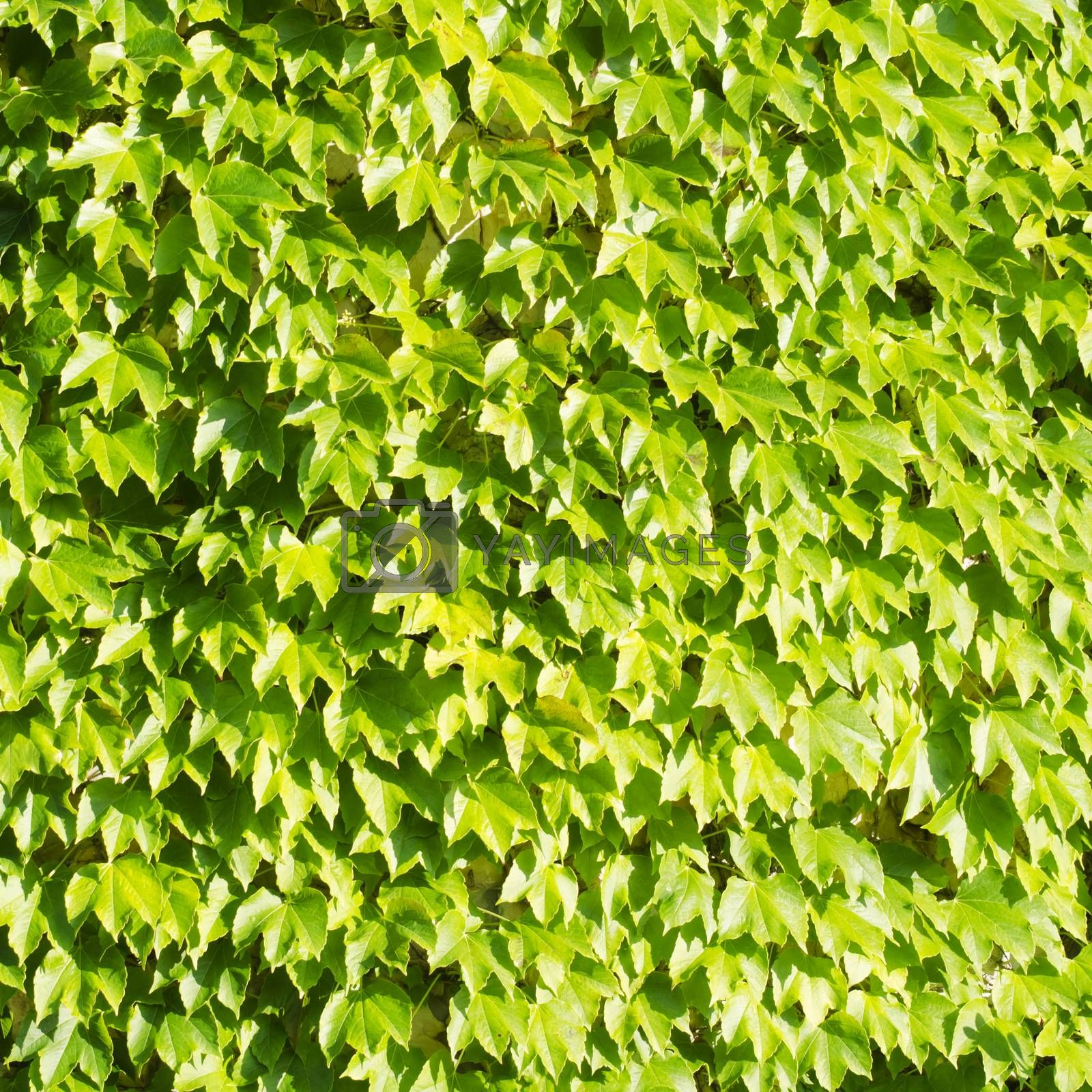 Photo of the Green Leaves Background