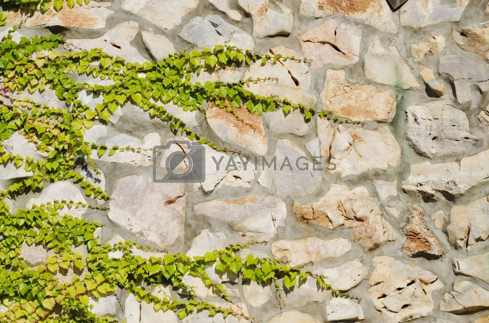 Photo of the Natural Stone Wall With Greenery