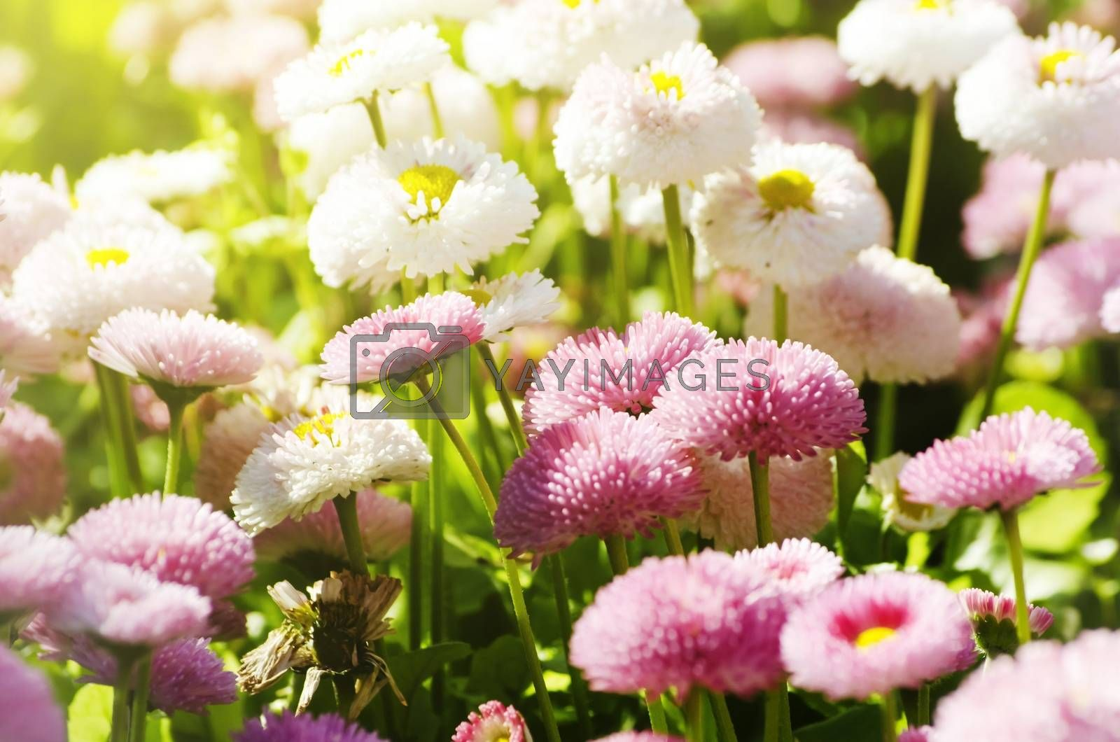 Photo of Spring or Summer Flower Over Natural Background