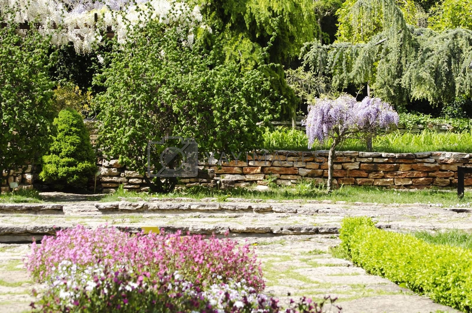 Photo of the Gardening and Landscaping With Decorative Trees
