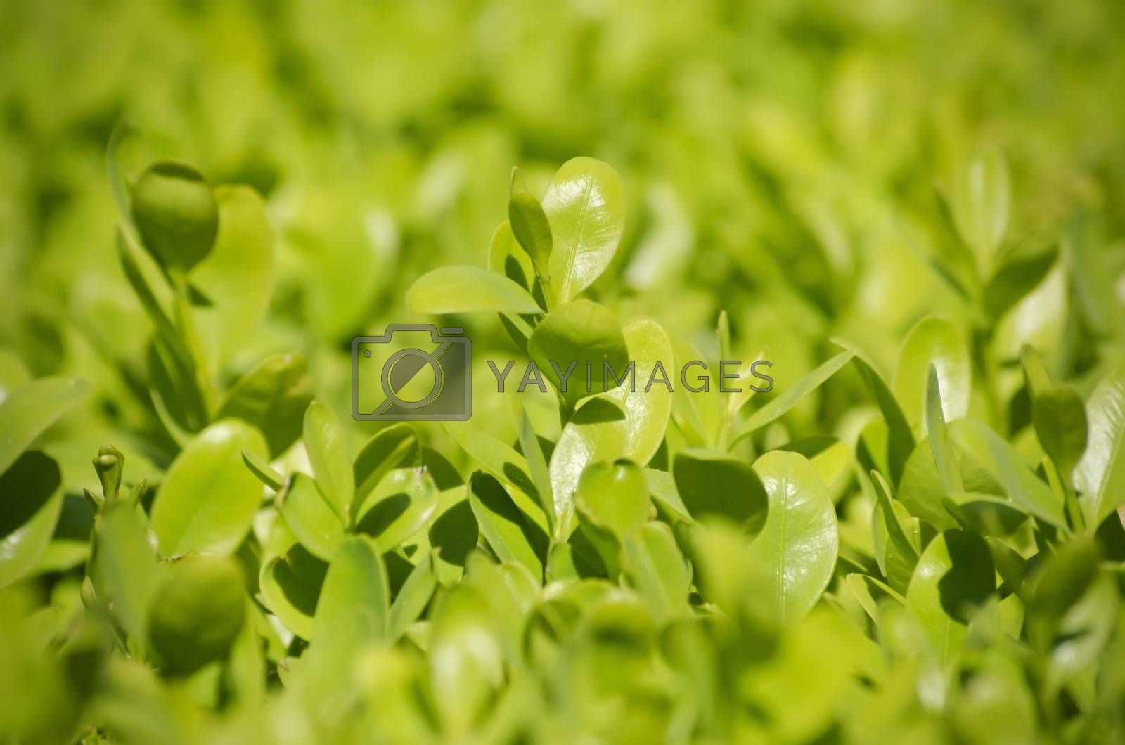 Photo of Vitality Green Spring Leaves
