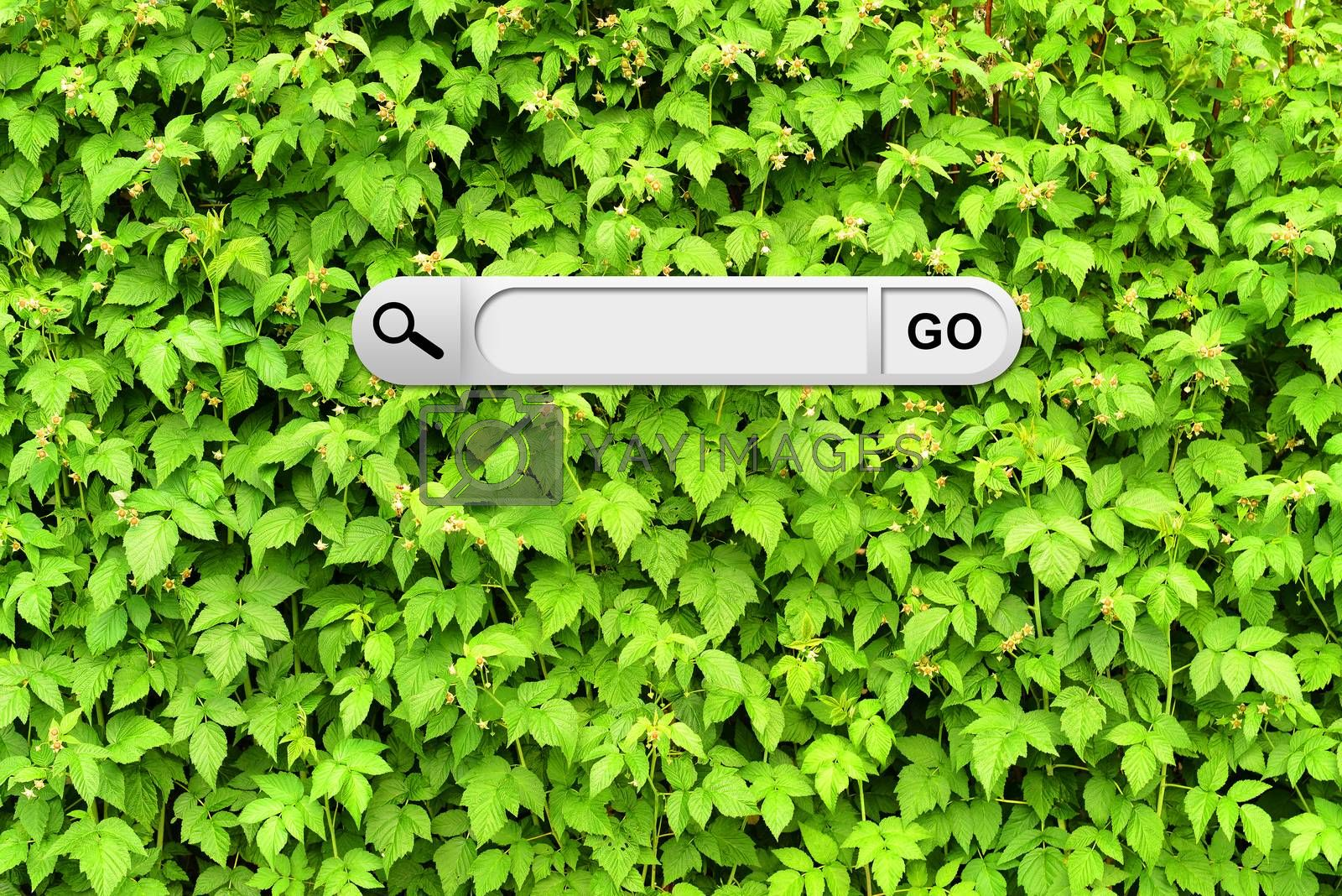 Search bar in browser. Wall of green branches raspberry on background
