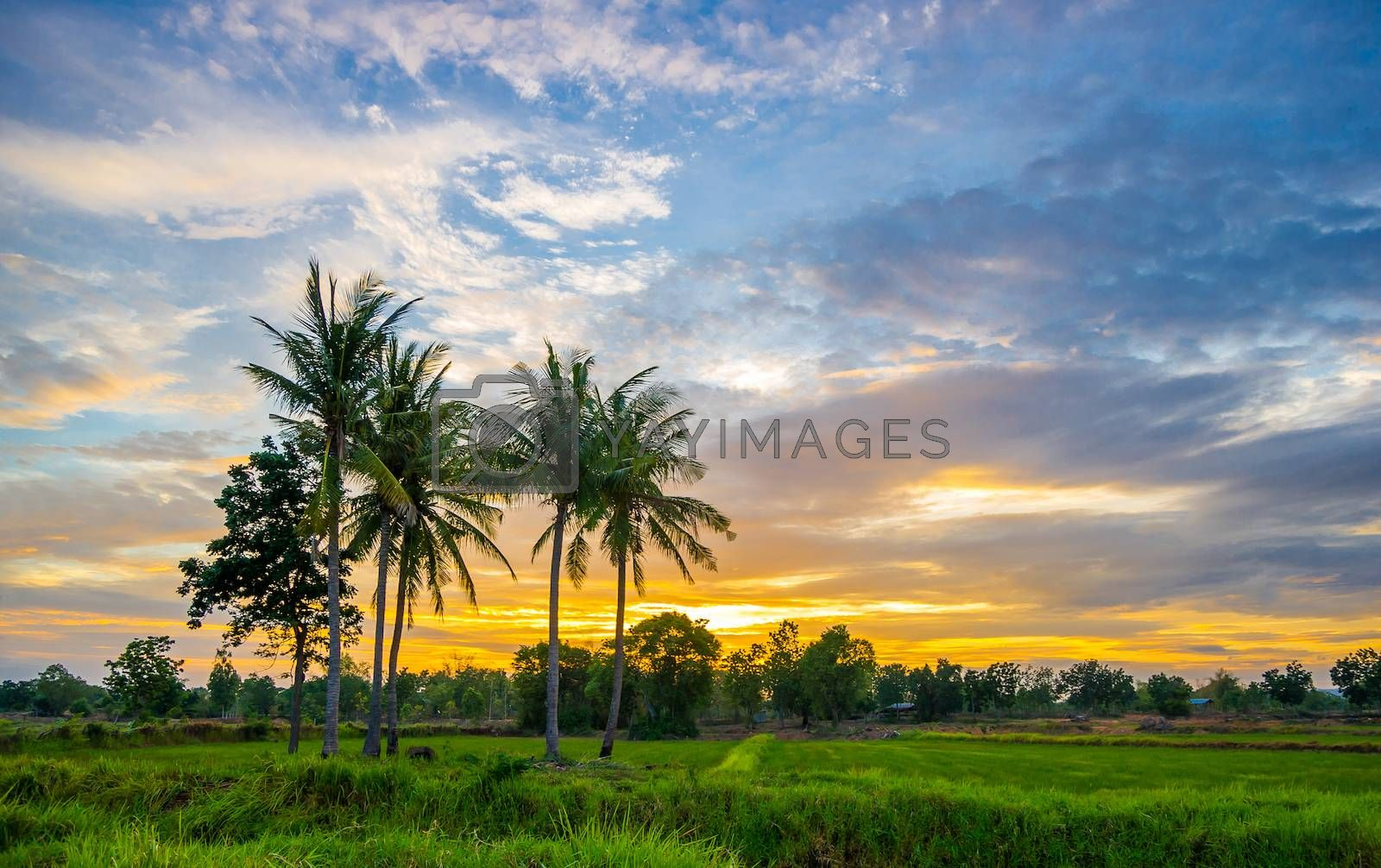 Lanscape sunset in the countryside of Thailand.
