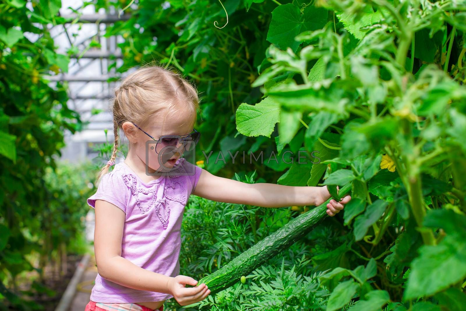 Cute little girls collects the cropcucumbers in the greenhouse