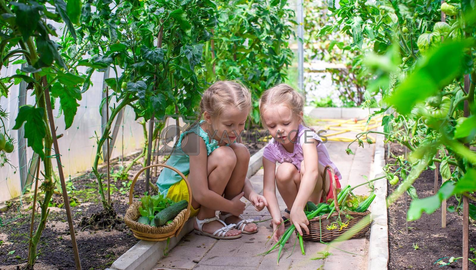 Cute little girls collects the crop cucumbers in the greenhouse