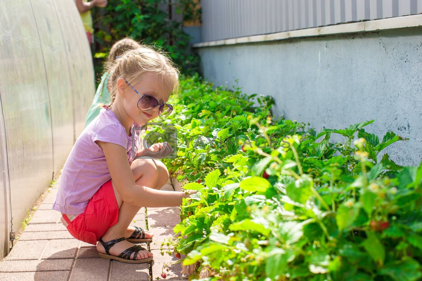 Little charming lovely girl in greenhouse harvests, berries and strawberries