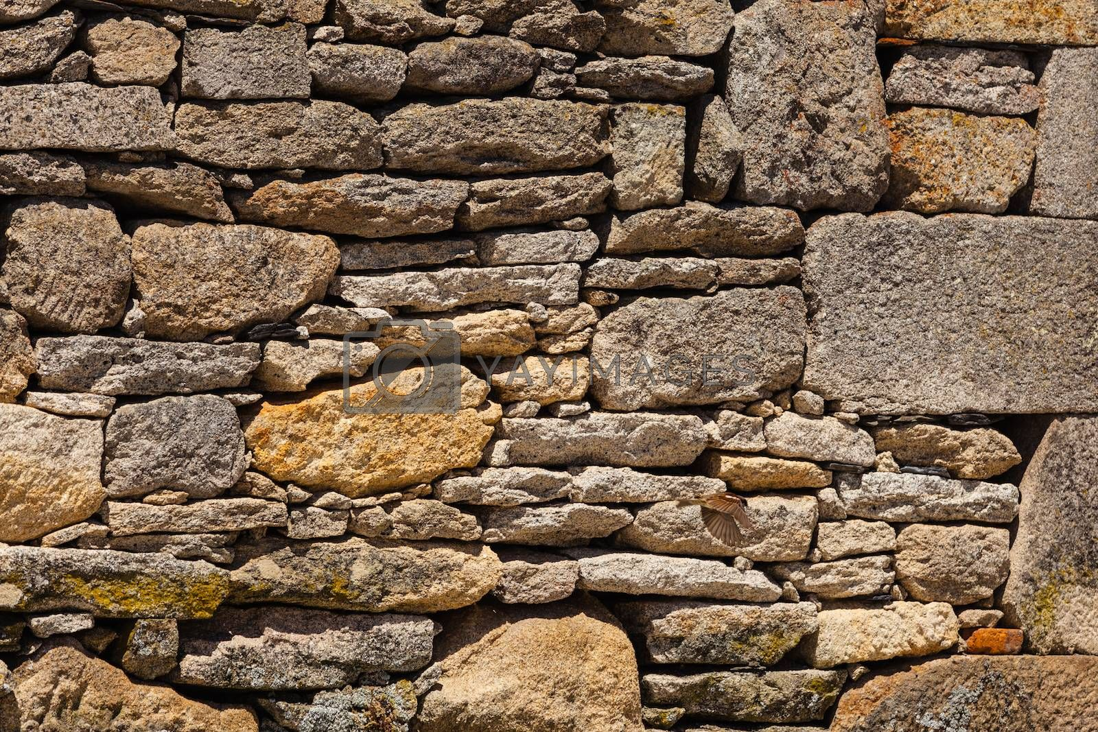 Textured wall surface in a small village of Spain made from granite and a  bird captured flying at the right bottom side of the picture