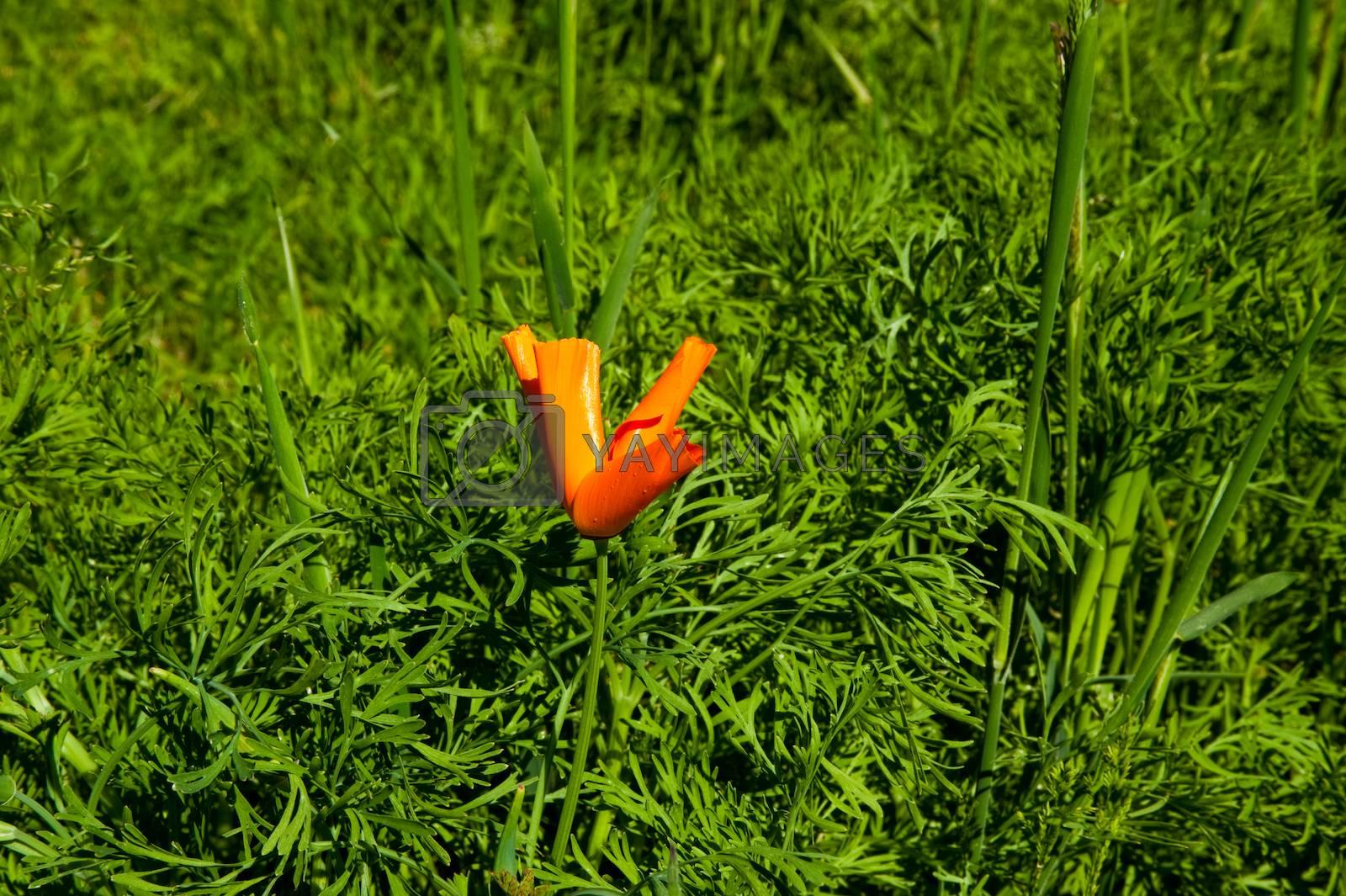 Orange flowers in sunlit garden