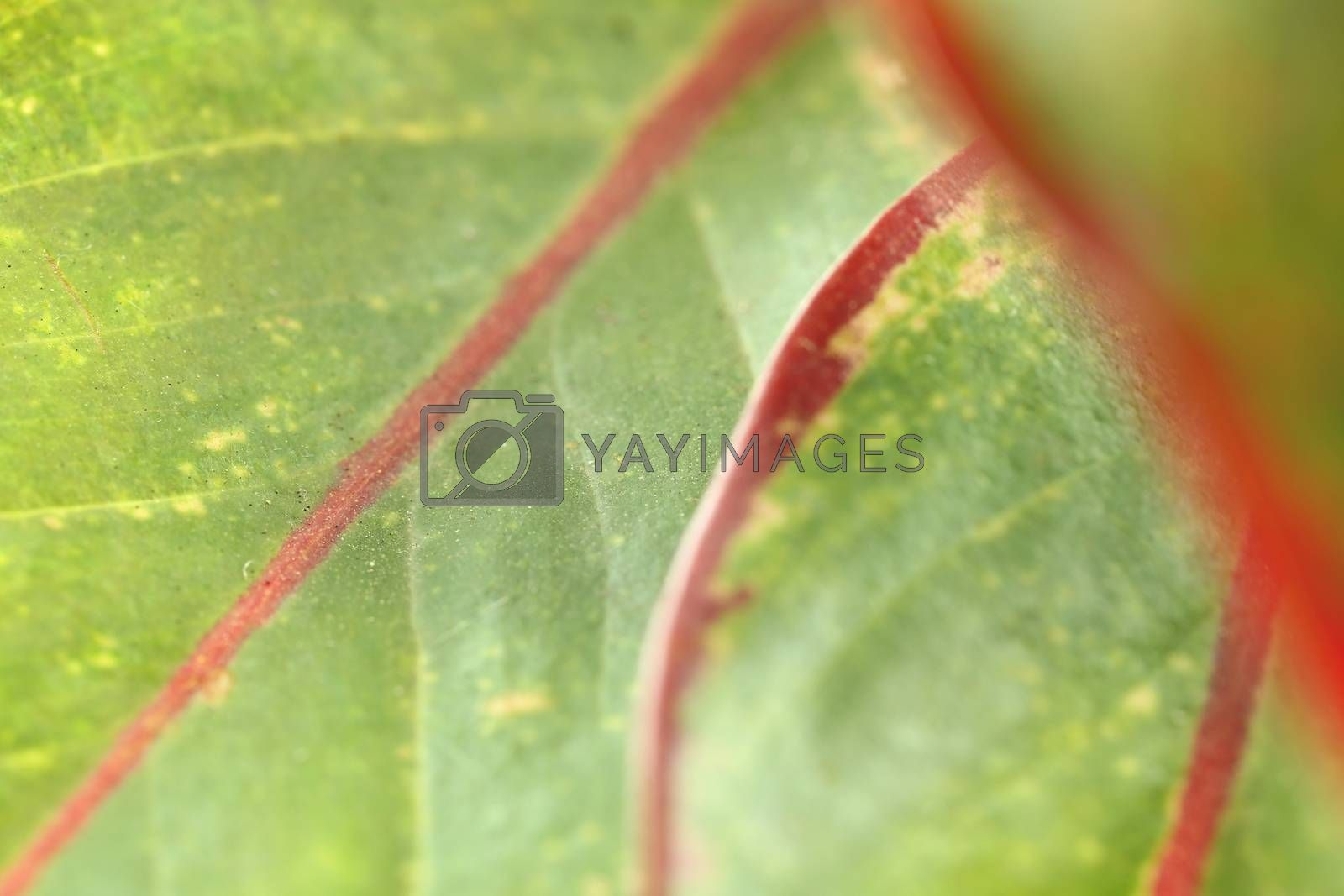 pattern of leaf in macro for natural background.
