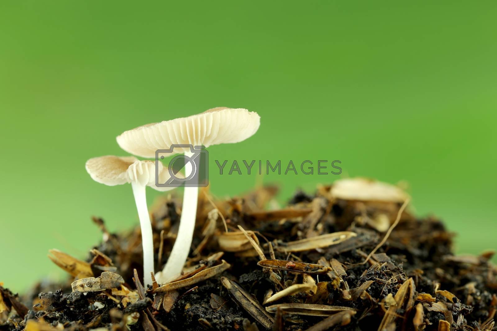 wild mushrooms on ground in macro style.