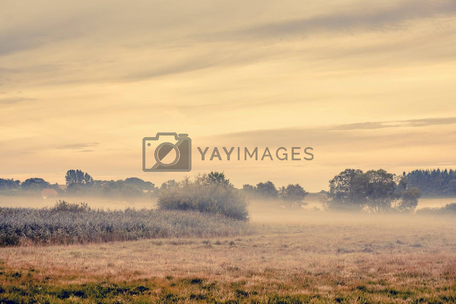Fog over a countryside landscape with fields and trees
