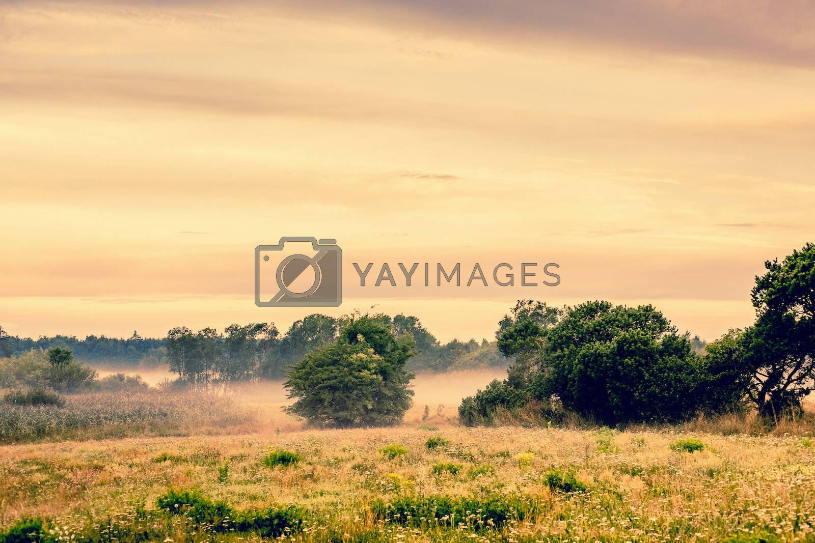 Countryside landscape with misty weather