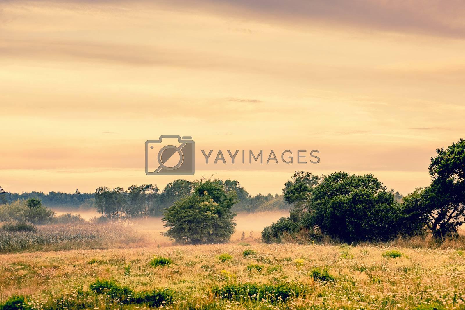 Misty countryside landscape by Sportactive
