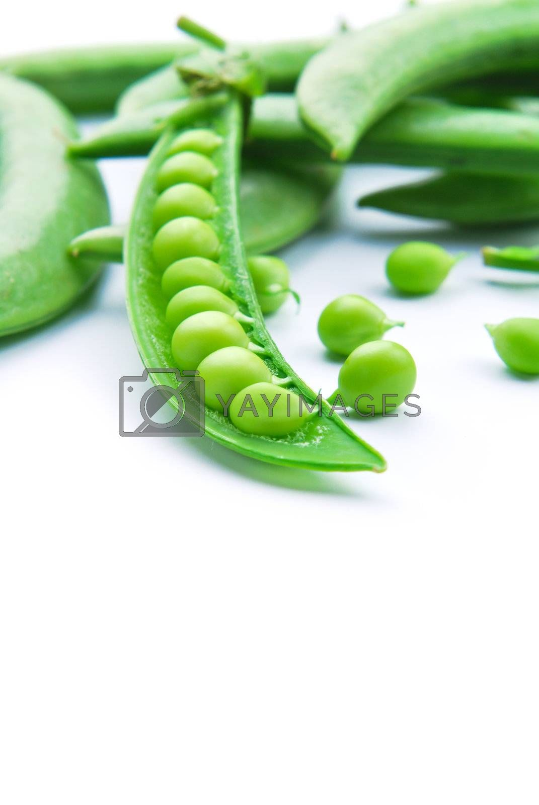 Royalty free image of Fresh green pea pod by teen00000