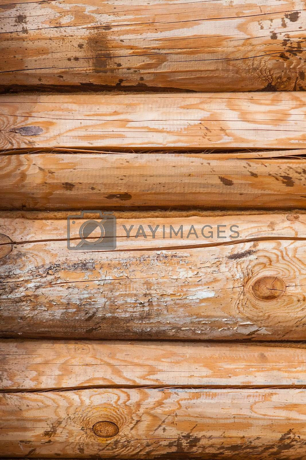 Royalty free image of Log wall by Edoma